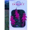 The flora of Dorset