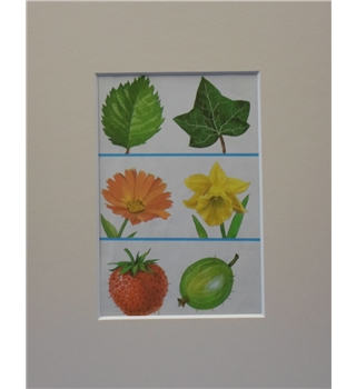 "LadyBird  talkabout Gardens   1976 mounted print ""more leaves, flowers and fruit"""