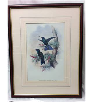 Collection of 9 prints with Tropical Birds REDUCED!!! £250