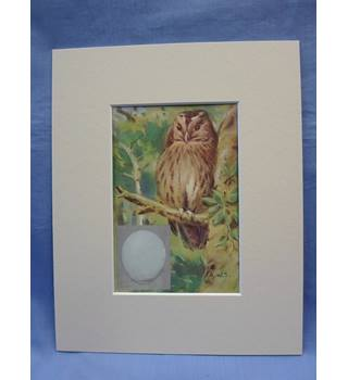 British Birds: tawny owl