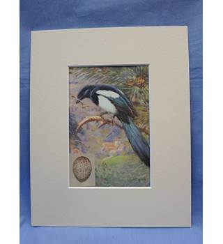 British Birds: magpie