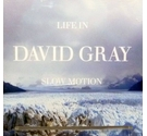 Life In Slow Motion - Gray, David