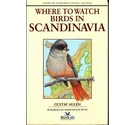 Where to watch birds in Scandinavia