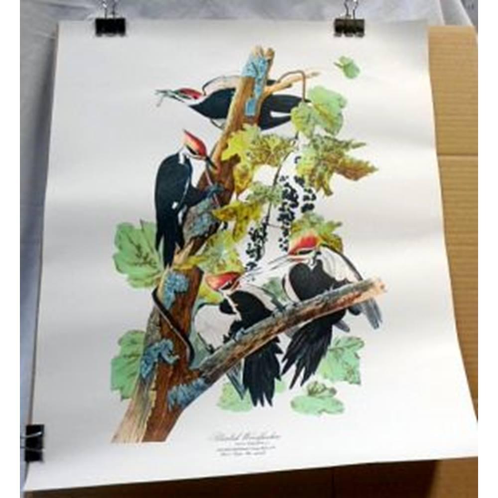 3 large Audubon Bird Studies & Jacques Barraband Le Tocard | Oxfam GB |  Oxfam's Online Shop