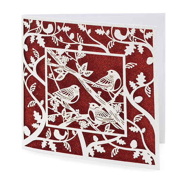 Luxury Robin Christmas Cards (5 Pack)
