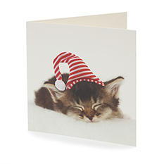 Christmas Cat card (10 pack)