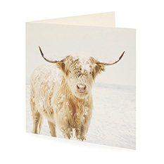 Large Highland Cow Christmas Card (10 Pack)