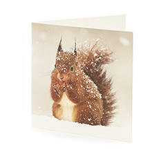 Value Snowy Animals Slim Christmas cards (20 pack)
