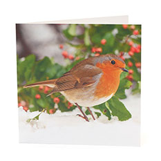Photographic Robin Christmas card (10 pack)