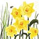 Easter Working Bee & Daffodil Card (Single)