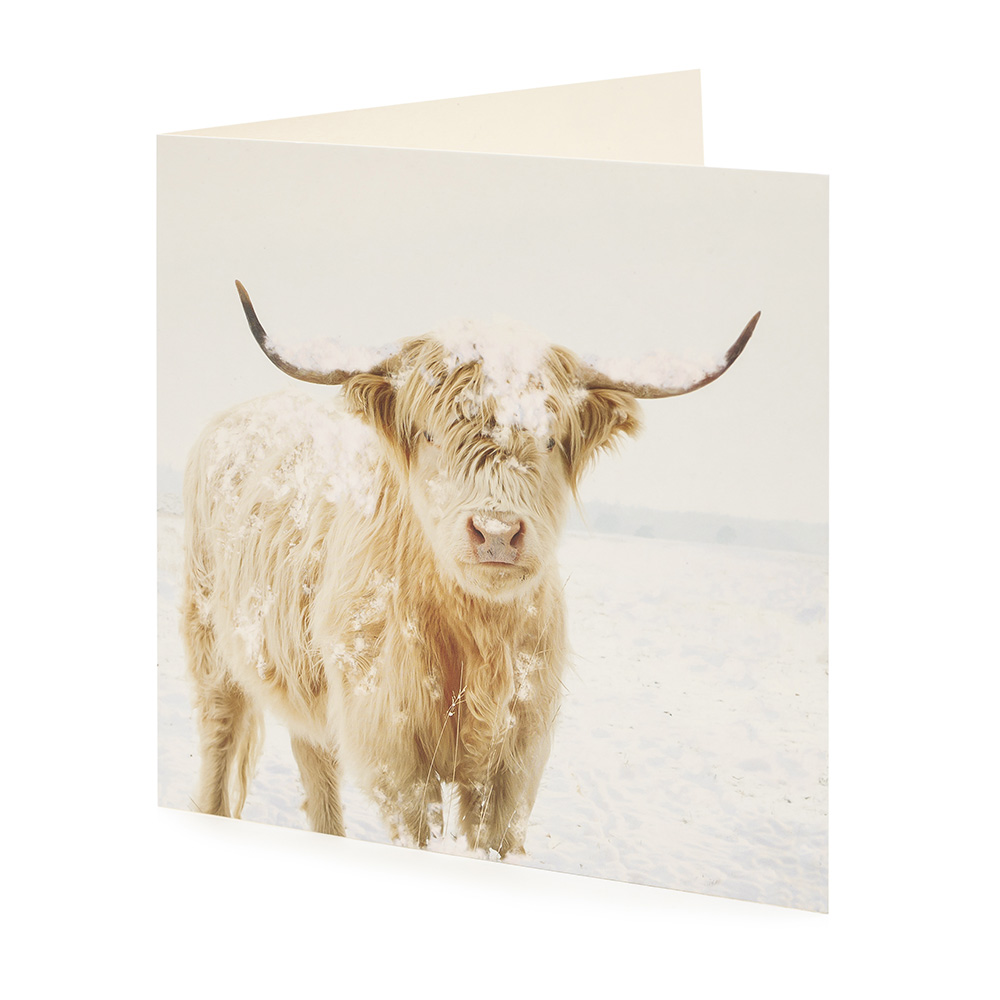 Large Highland Cow Christmas Card (10 Pack) | Oxfam GB | Oxfam\'s ...